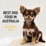 Best Dog Food