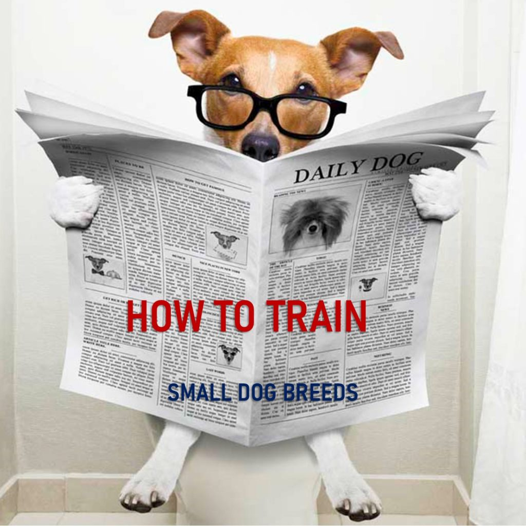 How to Train Small Dog Breeds