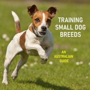Training Small Dog Breeds
